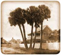 "Palmetto grouping known as the ""Five Indians"" on Sullivan's Island, summer of 1860; Fort Moultrie lay just out of sight beyond the buildings at left"